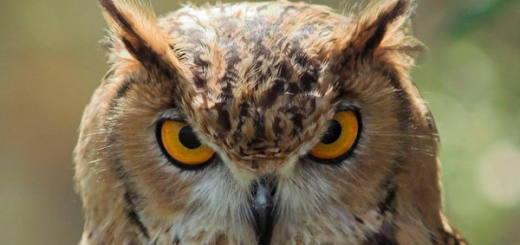 Сова — птица дьявола