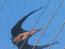 Снимок птерозавра