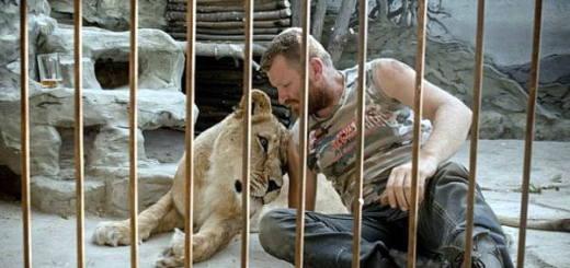 львица в клетке