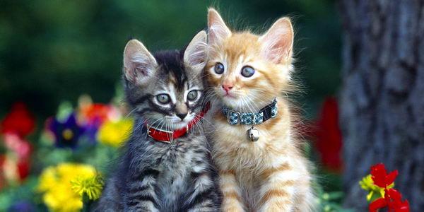 Кошки сами решили жить рядом с человеком 5000 лет назад