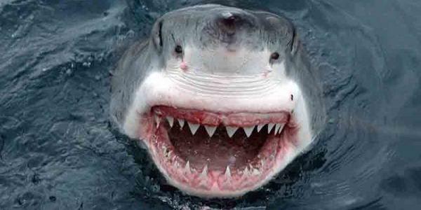 Люди являются родственниками акул