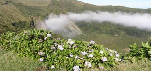 Загадка цветущих островов Португалии